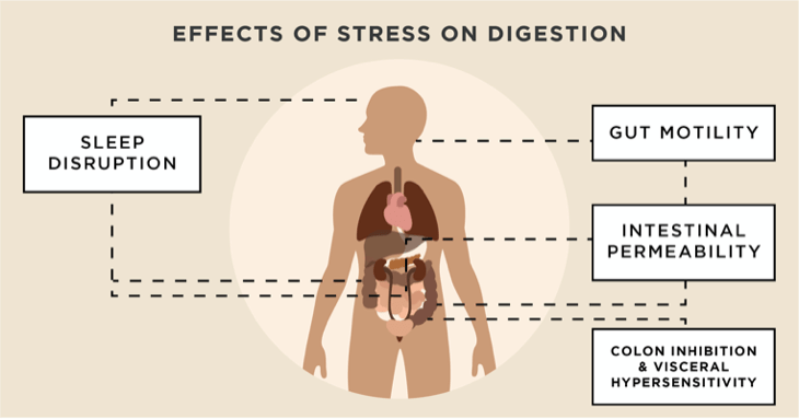 Effects of Stress on Digestion